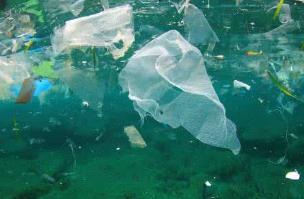 政协委员呼吁尽快制定外卖包装标准治塑料污染