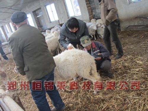羊用B超測孕孕儀